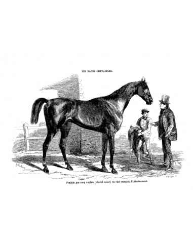 Gravure 5 - Cheval Anglo-Normand